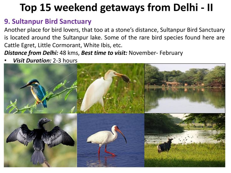 Sultanpur Bird Sanctuary : Another place for bird lovers, that too at a stone's distance, #Sultanpur #BirdSanctuary is located around the #Sultanpurlake. Some of the rare bird species found here are Cattle Egret, Little Cormorant, White Ibis, etc.