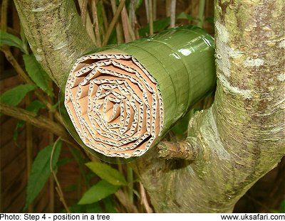 "The cheapest way to make an ""insect hotel"" for ladybugs to hibernate in winter."