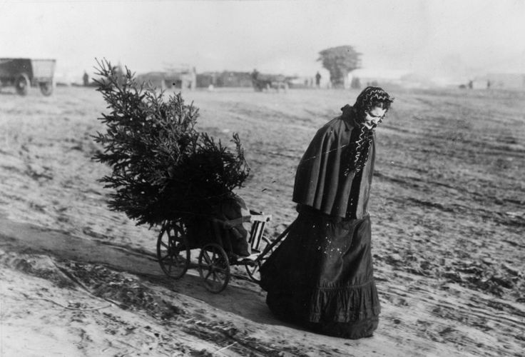 A woman returning home with a Christmas tree, 1895...