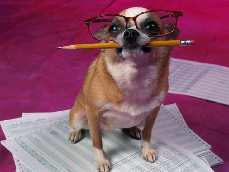 Un estudio sobre Inteligencia Canina revela cuáles son las razas más inteligentes. Sin embargo, si os preguntamos a cada uno de vosotros cuál es el perro más listo, seguro que respondéis... ¡El mío! :D