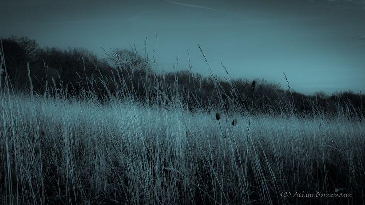 Dry Grass -