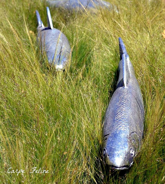 47 best images about ceramic sculpture on pinterest for Fish garden statue