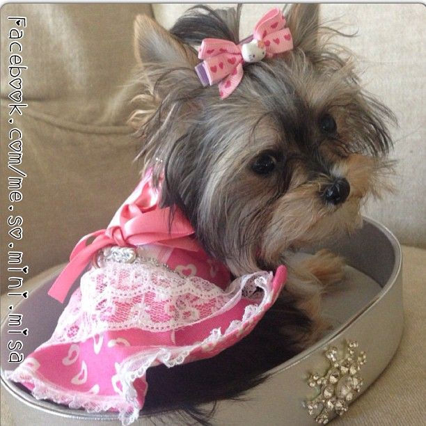 Misa Minnie is so adorable! Check out her videos on YouTube! She is SO SMART!!