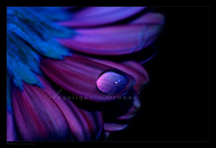 Purple by *Liek