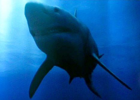 Shark Week Megalodon: Fake Documentary