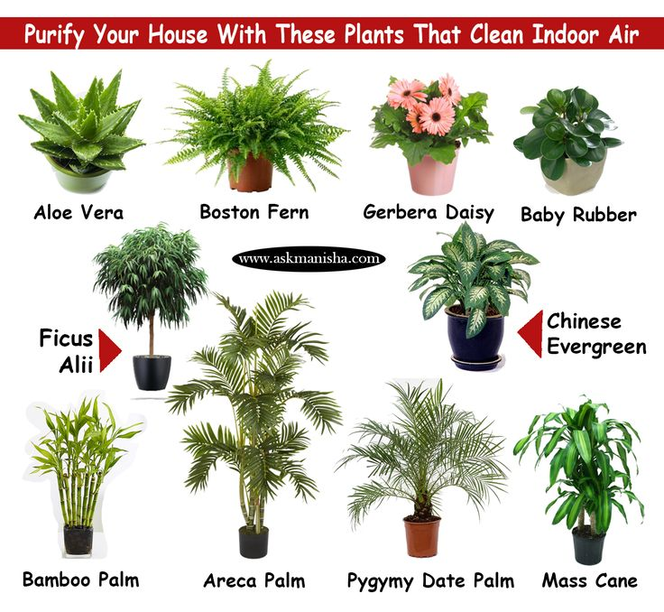 Purify Your House With These Plants That Clean Indoor Air.