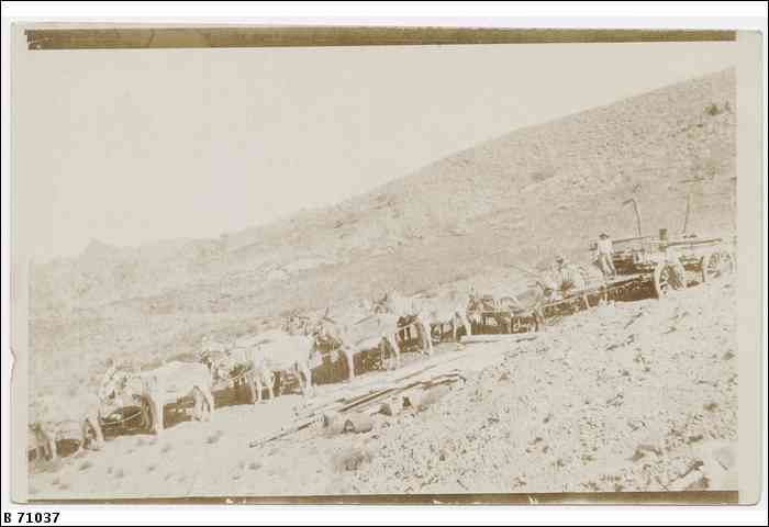 A man in an open wagon at Yudnamutana, being pulled by a donkey team. ca. 1900