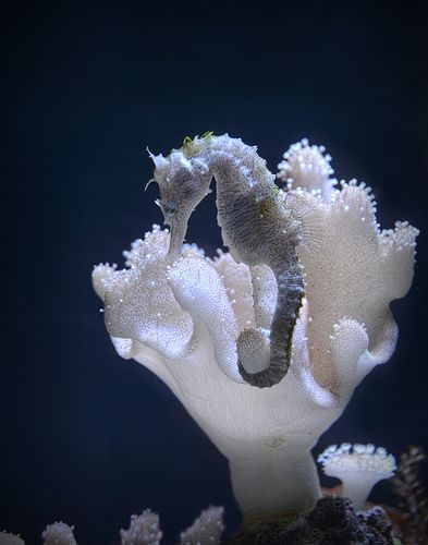 I've always been fascinated with seahorses!