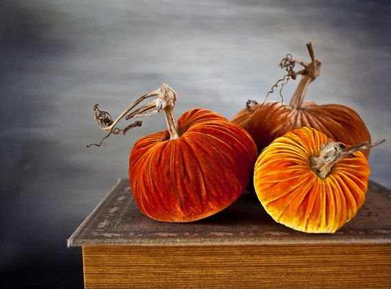 Velvet Pumpkins: Sunrise Collection by PlushPumpkin on Etsy