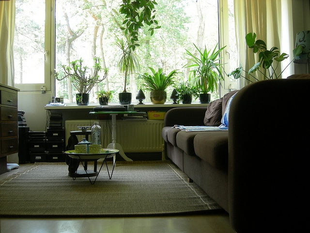 326 Best Images About Indoor Plant On Pinterest