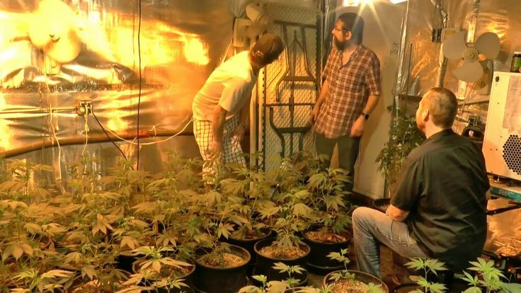 Growing THC