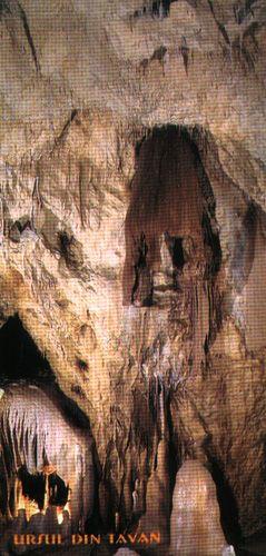 """Peştera Urşilor - Ursul din tavan Se spune ca numele de """"Pestera ursilor"""" vine de la 140 de ursi care au ramas blocati in pestera dupa ce o stanca s-a pravalit peste intrare. Legenda este sustinuta de numarul impresionant fosile ale ursului de caverna, disparut acum 15.000 de ani, gasite in pestera."""