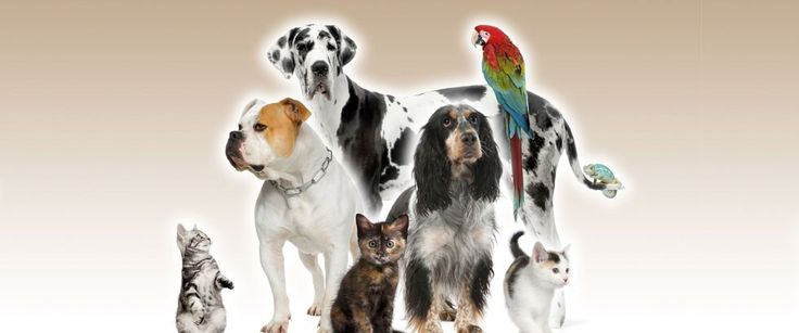 Sondra s City Zoo – Pet Supplies #cheap #pet #supplies http://pet.remmont.com/sondra-s-city-zoo-pet-supplies-cheap-pet-supplies/  YOUR 1-STOP SHOP Pet Supplies Live Animals Taking care of a pet is a lot of work, which is why we strive to provide everything you need for your animals all in one convenient location. That's why pet people love Sondra's City Zoo of Elmira, NY! We have top-brands for all of your lovable critters. Whether you're a new pet owner or a seasoned vet, we have everything…