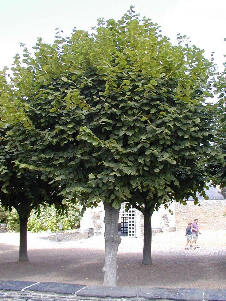 17 meilleures id es propos de arbre caduc sur pinterest fen tres ovales fenetre oeil de. Black Bedroom Furniture Sets. Home Design Ideas