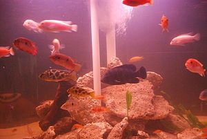 Finding Suitable Tropical Fish Tanks for Sale
