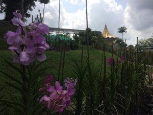 Kota Kuching, Destinasi Wisata Luar Negeri dari Kota Khatulistiwa - RJasa Rentcar and Taxi Service