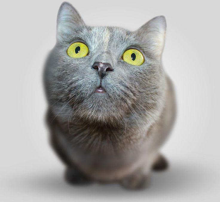 I saw a lizard on ceiling Good morning @weareking0202 #goodmorning #catsofinstagram #lovecats #cats #bestmeow #meowbox #lovekittens #ilovecats #catstagram #catskills #cats_of_instagram #kittycat #cute #catsoninstagram #catselfie #catslovers #cutecat #kitten #catsgram #instagramcats #instacats #catsofworld #dogs_of_instagram #dogsofinstagram #dogstagram #instagramdogs