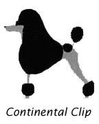 Standard Poodles Continental Clip
