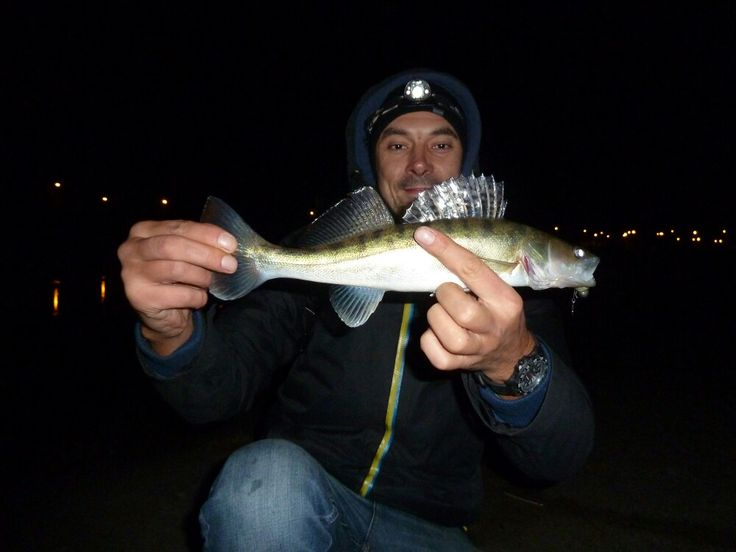 Fish from Warta river