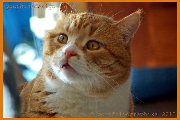 Portfolio Multimedeia: Oranssi on kissan väri