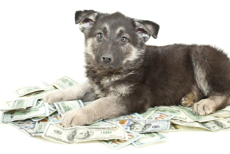 Some money saving tips on caring for your pets ... http://www.getcashbackonthat.com