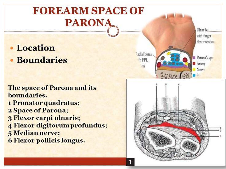 FOREARM+SPACE+OF+PARONA.jpg (960×720)