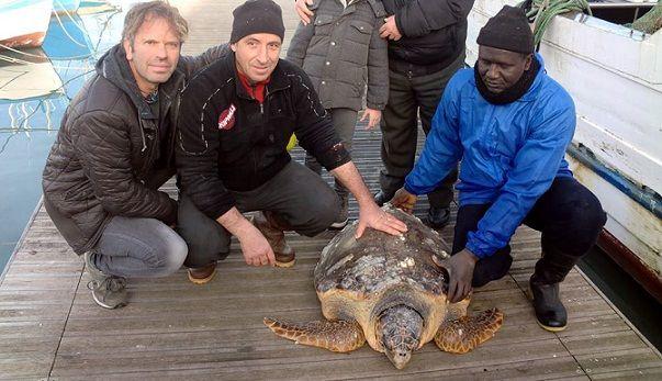 Primi interventi del nuovo anno al Centro di Recupero Tartarughe Marine di Molfetta