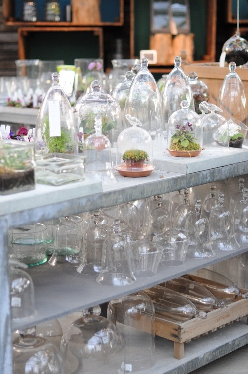 WE BUY TEWKSBURY FLORIST WHERE MY GRANDMOTHER WORKED AND YOU BLOW GLASS IN UNCLE WALTERS GARAGE AND WE MAKE TERRARIUMS AND SELL THEM ONLINE AND IN THE SHOP, EVEN STEVEN. Terrarium heaven..