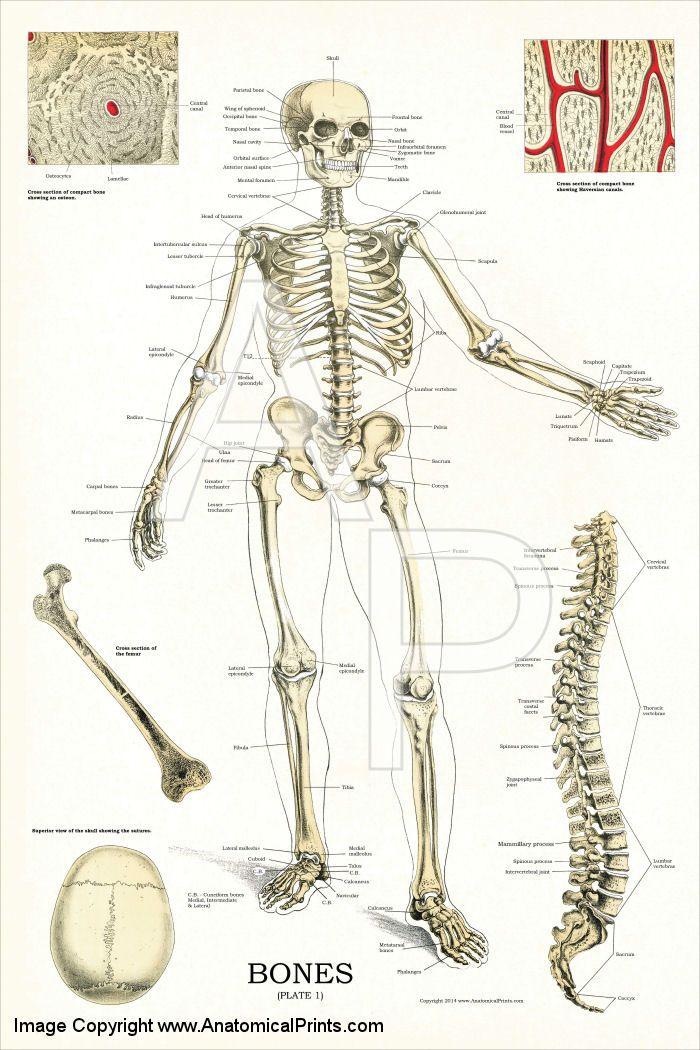 17 best Mesas de diagnóstico images on Pinterest | Mesas, Products ...