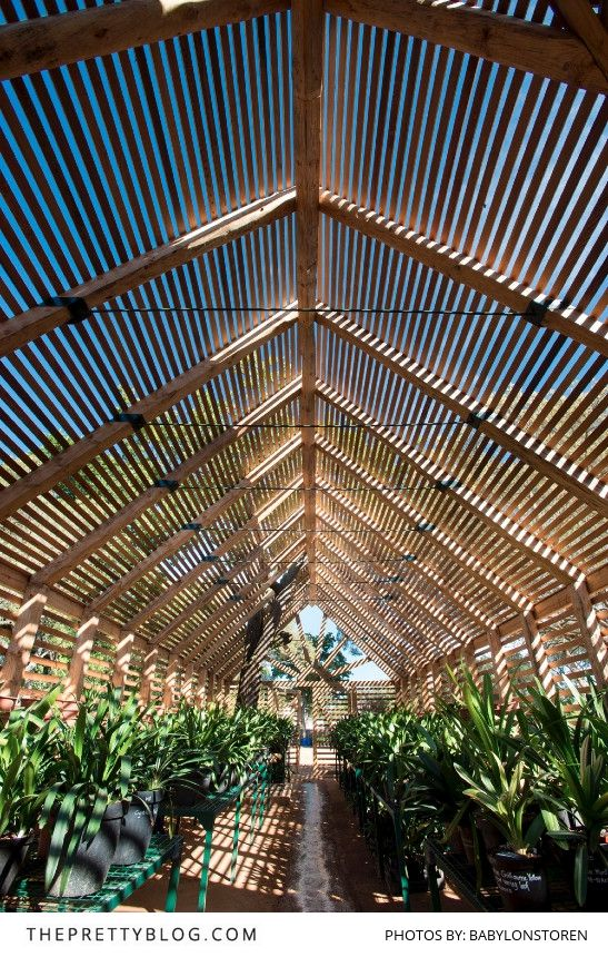Visit the beautiful gardens at Babylonstoren | Franschhoek