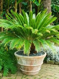 Tropical patio landscape with potted plants - Google Search