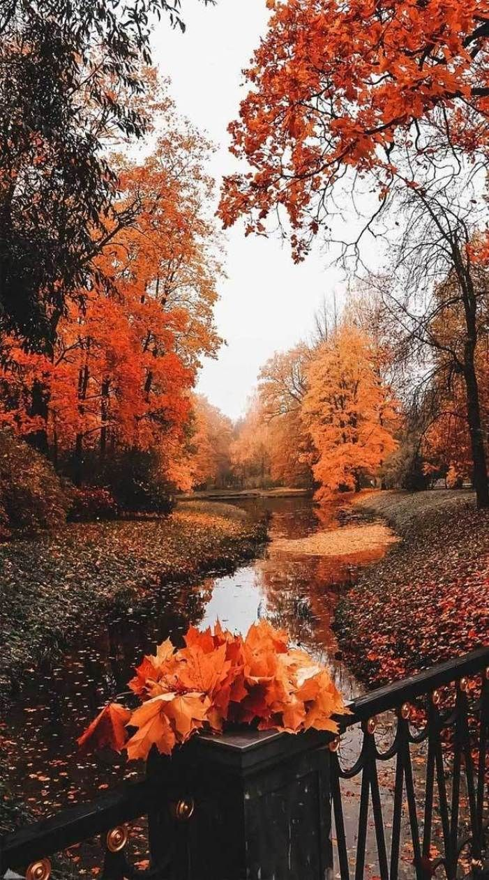 22 Beautiful Autumn Images Autumn Images Free Autumn Aesthetic Fall Aesthethic Fall Images Beautiful Pict Autumn Scenery Fall Wallpaper Autumn Photography