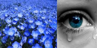 diane.ro: Buchetul albastru - Povestire de Octavio Paz
