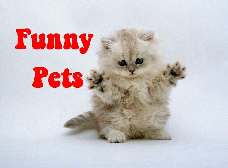 Top funny videos Pet vines 2014 |  Funny animals compilation for childre...
