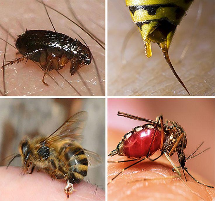 Лекарственные растения, рекомендуемые народной медициной при укусах змей и насекомых