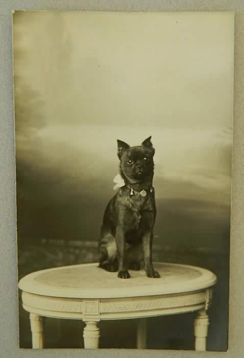 Antique Postcard Petit Brabancon- Early 1900's