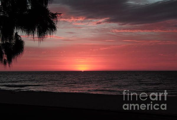 Pink Sunset image. Available on many products on Fine Art America. Photograph taken by Tracey Everington of Tracey Lee Art Designs. #art #photography #sunset #beach #palmtree
