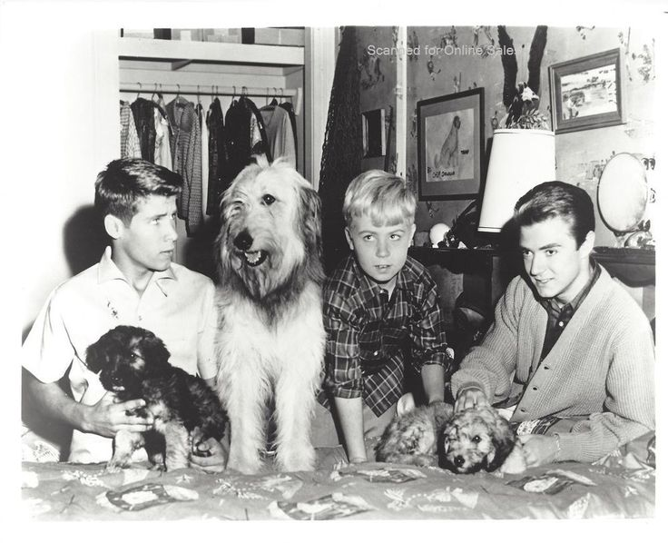 My Three Sons Tim Considine Don Grady 8x10 Photo