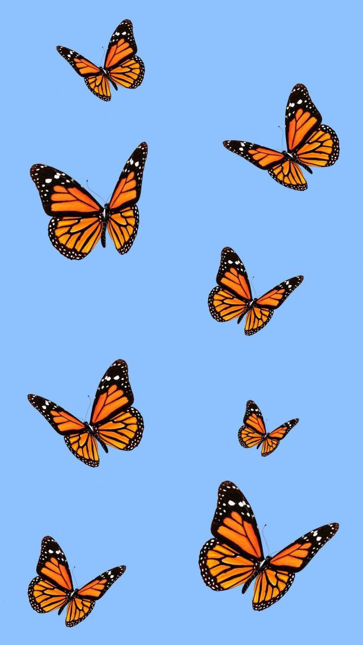 Esthétique Iphone Wallpaper #monarchbutterfly #butterfly # ...