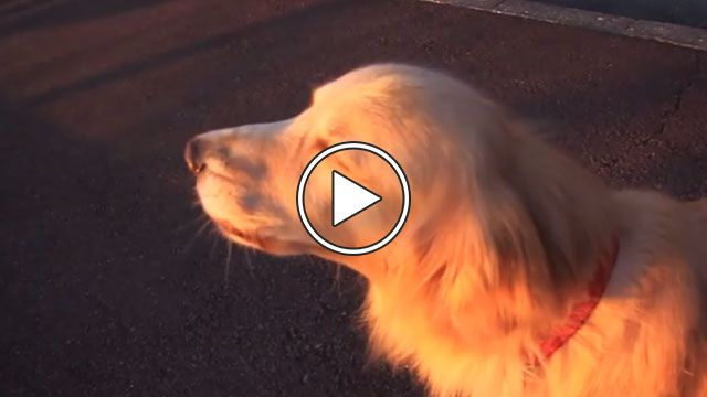 Dog Imitates Emergency Siren
