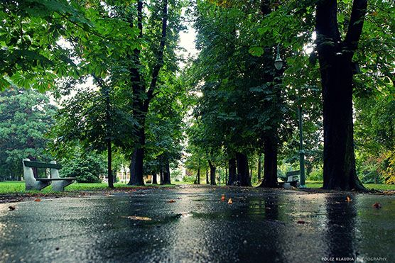 A soproni Erzsébet-kert helyreállítási feladatai