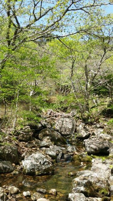 Yeongsil track on Hallasan Mountain