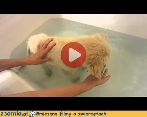 Pierwsza kąpiel « Psy « Śmieszne filmy o zwierzętach - śmieszne koty, śmieszne psy. Zoomia.pl :: Zoomia pl