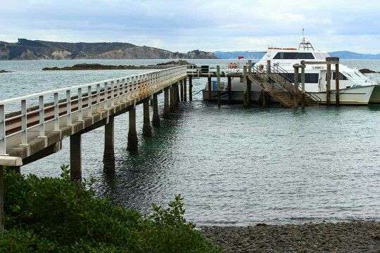 Ferry about to depart from Tiritiri Matangi to Auckland