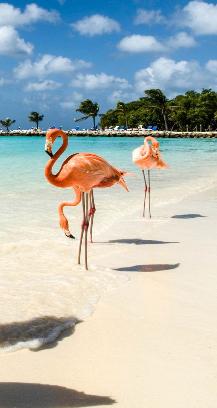 Oranjestad, Aruba | Oranjestad is the capital of the Dutch island of Aruba. And here is where that picture of those neon-pink Flamingos you saw on Instagram are found. Cruise with Royal Caribbean to Oranjestad, Aruba and head to the private Flamingo beach where you'll get up close to these exotic animals. It's a unique island experience and one that will leave you with beautiful memories and equally beautiful pictures.