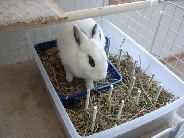 How To Build A Bunny Condo Stuff For Bunnies Bunny