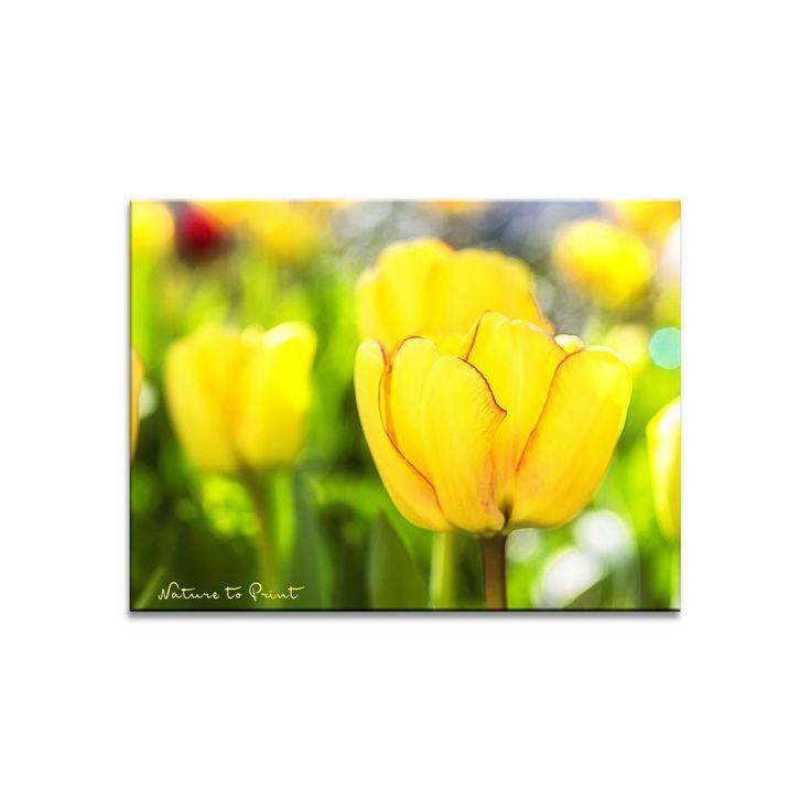 Frühlingsbild Beauty of Spring