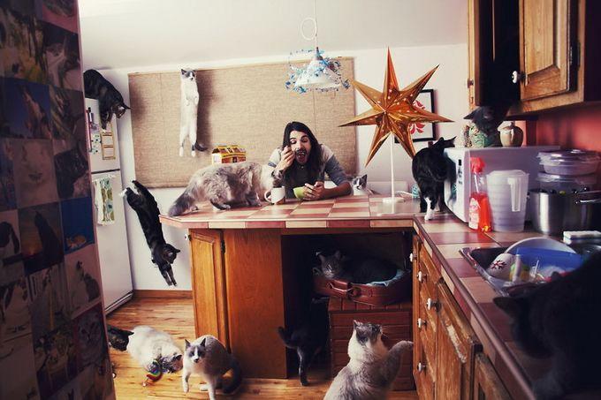 Сумасшедшие любители кошек \ Photography
