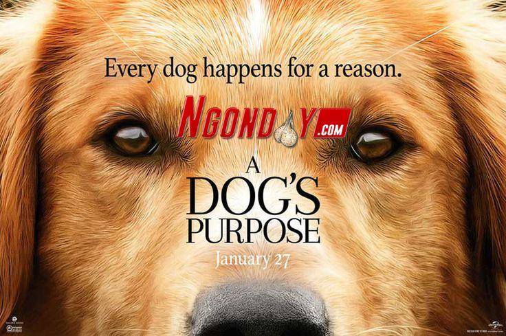 NONTON FILM A DOG'S PURPOSE (2017) SUBTITLE INDONESIA Genre: Adventure, Comedy, Drama Release Date: 27 January 2017 IMDB Link: tt1753383 IMDB Rating: 5.9