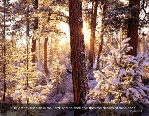 2015 Promotional Wall Calendars - Faith Passages  Religious Christian Calendar - December 2014  Snow Covered Trees  Psalm 37:4 Delight thyself also in the Lord; and he shall give thee the desires of thine heart.  Imprinted with your Business, Organization or Event Name, Logo and Message as low as 65¢ visit www.promocalendarsdirect.com/calendars/faith-passages from more details